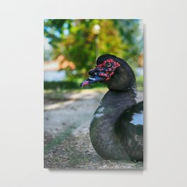 Muscovy Duck - Colorful Metal Print