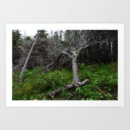 Forest Spirit (Full image skull and trunk)  Art Print