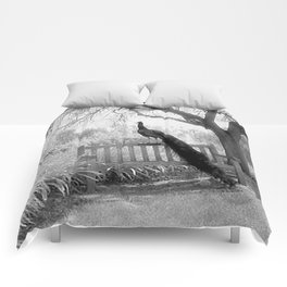 Bench Peacock Comforters