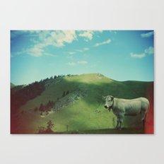 Mountain cow Canvas Print