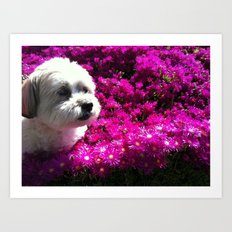 Spring Puppy Art Print