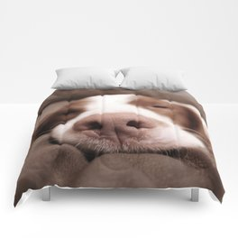 Funny Dog Photography Brittany Spaniel Close Up  Comforters