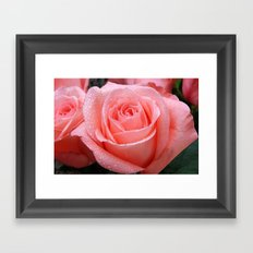 Fresh Roses Framed Art Print