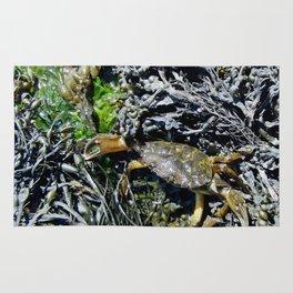 Soft Shell Crab Rug