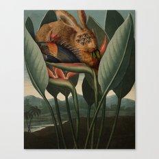 Class V. Pentandria Canvas Print