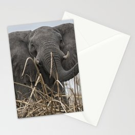 Elephant Along the Okavango River Stationery Cards