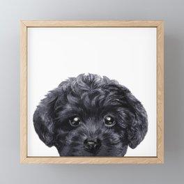 Black toy poodle Dog illustration original painting print Framed Mini Art Print