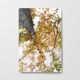 Fall Colors  //  Look Up Metal Print