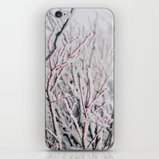 Winter Snow  iPhone & iPod Skin