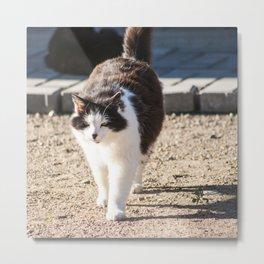 Adorable fluffy cat Cat04 Metal Print