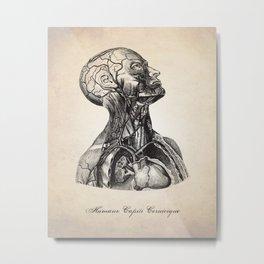 Head and Neck Human Anatomy Illustration Metal Print