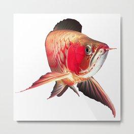 Super red arowana Metal Print
