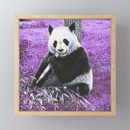 Funky lilac Panda Framed Mini Art Print