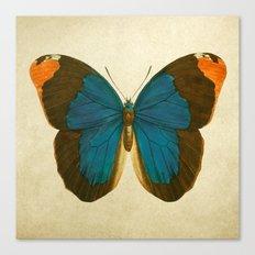 Lepidoptera # 1 Canvas Print
