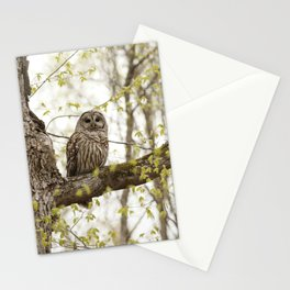 Beautiful barred owl Stationery Cards