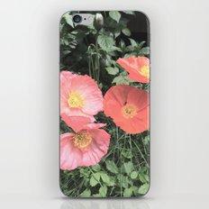 Papaveraceae iPhone & iPod Skin