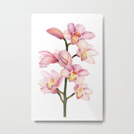 The Orchid, A Realistic Botanical Watercolor Painting Metal Print
