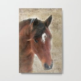 Bay Arabian horse by Studio MG Metal Print