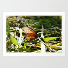 Beauty in a Small Life Art Print