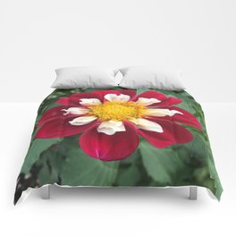 Mary Evelyn Dahlia Comforters