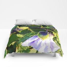Shoo Fly - Apple of Peru - Nicandra Comforters