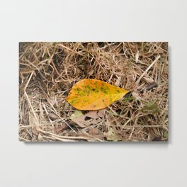 Yellow leaf on the ground Metal Print