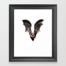 Long Tailed Bat / Pekapeka Framed Art Print