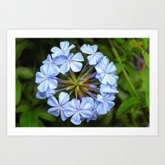 Circle of Flowers Art Print