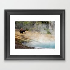Buffalo at Thermal Pool Framed Art Print