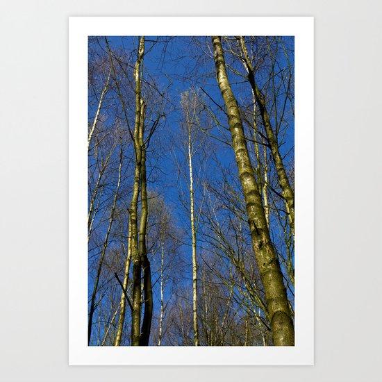 The Still forest Art Print