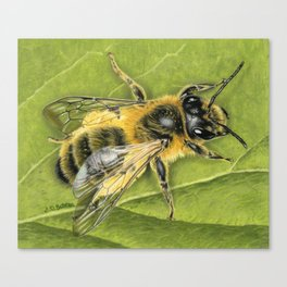 Honeybee On Leaf Canvas Print