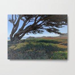 Wind blown tree along the California coast, Monterey Bay Metal Print