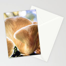 Chanterelle mushrooms in the forest Stationery Cards