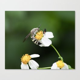 The Wasp and the Bug Canvas Print