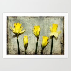 Daffodil's Art Print