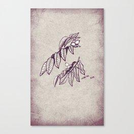 Walnut Canvas Print