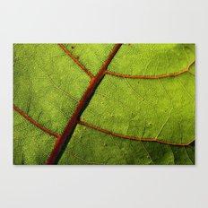 Leaf Veins II Canvas Print