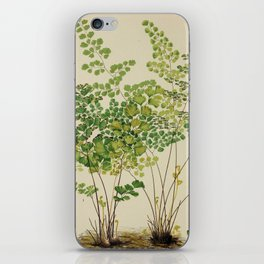 Maidenhair Ferns iPhone Skin