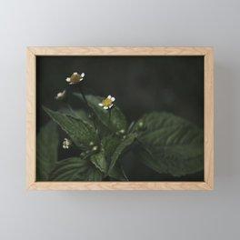Botanical Still Life Chamomile Framed Mini Art Print