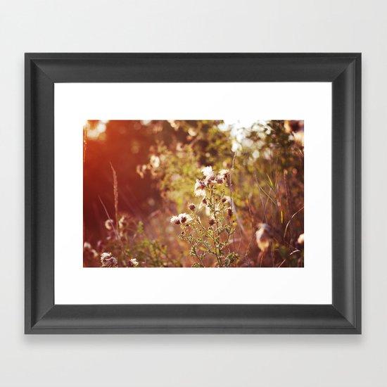 golden dandelions. Framed Art Print
