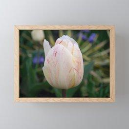 Peach Tulip Framed Mini Art Print