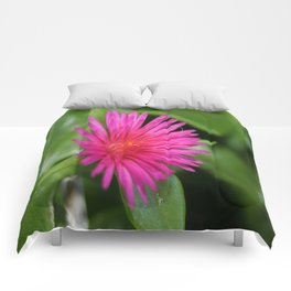 Pink Flower of Succulent Carpet Weed  Comforters