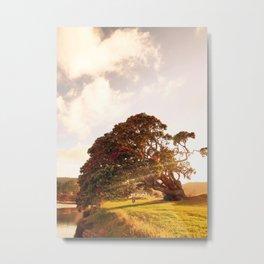 Pohutukawa swing tree Metal Print