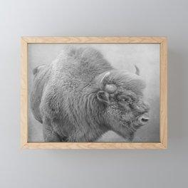 Bison Framed Mini Art Print