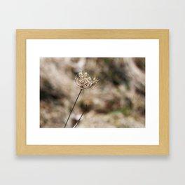 Winter Plants Framed Art Print