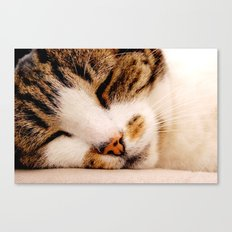 Sleepy Cat Canvas Print