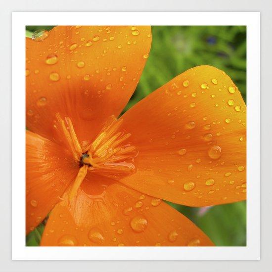 california poppy V Art Print
