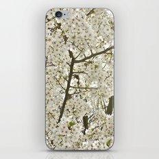 cherry blossom tree iPhone & iPod Skin