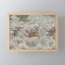 Group of Mule Deer Framed Mini Art Print
