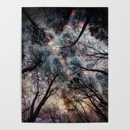 Starry Sky in the Forest Poster